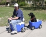 Taking the Dog For a Ride in the Cruizin Cooler